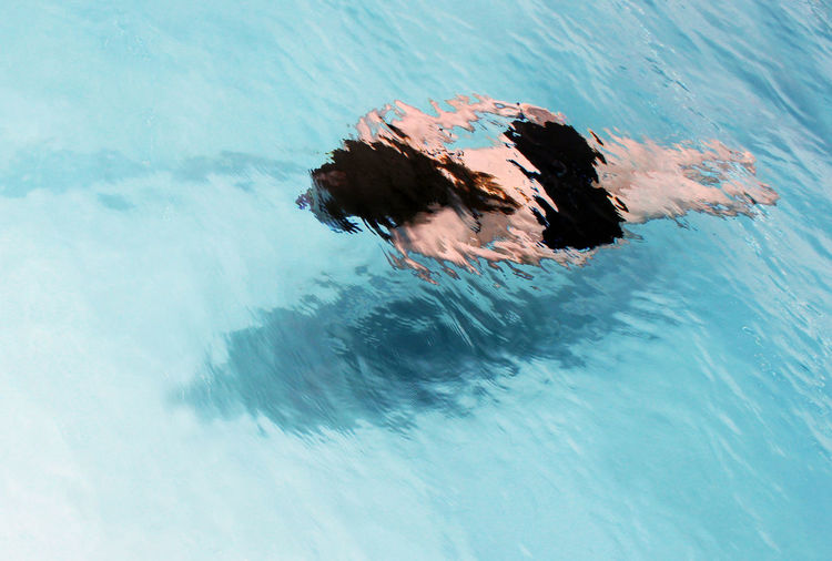 Close-up David Hockney Day Diving High Angle View Leisure Activity Lifestyles Nature One Person Outdoors People Real People Reflections Shades Of Blue Swimming Swimming Pool Water Water Reflections Waterfront Women Young Adult Young Women Summer Exploratorium