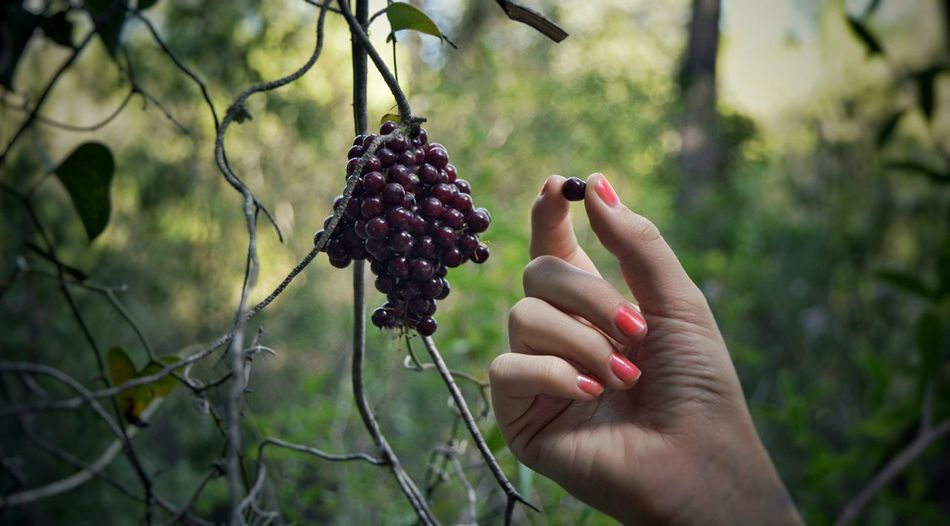 Cropped Image Of Woman Wild Berry In Forest