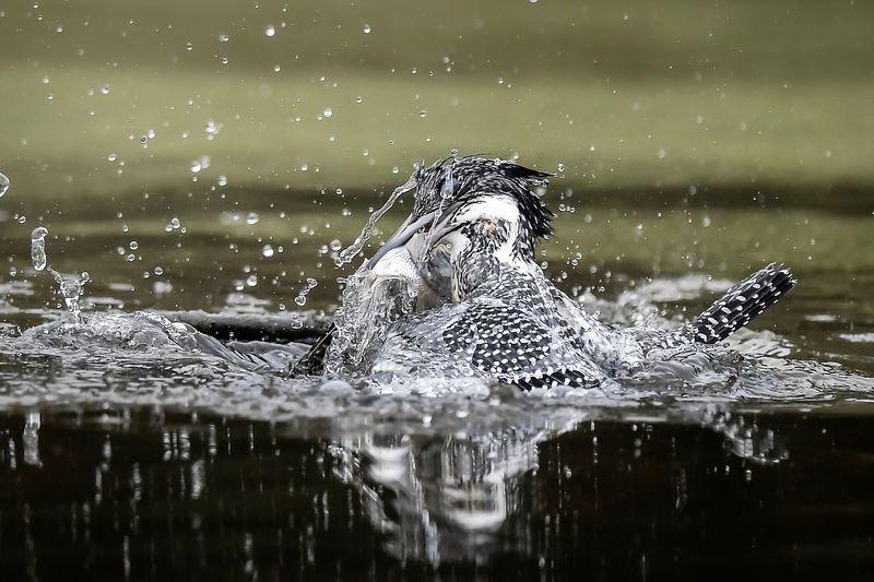 Water splashing in a lake