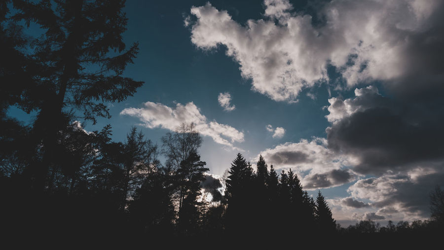 Tree Sky Cloud - Sky Plant Beauty In Nature Tranquility Silhouette No People Tranquil Scene Scenics - Nature Nature Low Angle View Growth Day Outdoors Non-urban Scene Forest Idyllic Sunlight Coniferous Tree EyeEm Best Shots EyeEm Selects EyeEm Gallery