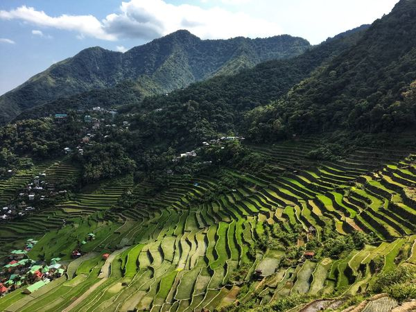 Batad rice terraces, Banaue, Philippines Mountain Scenics - Nature Beauty In Nature Agriculture Landscape Tranquil Scene Tranquility Environment Growth Green Color Terrace Rural Scene Plant Land Mountain Range Farm Nature Terraced Field
