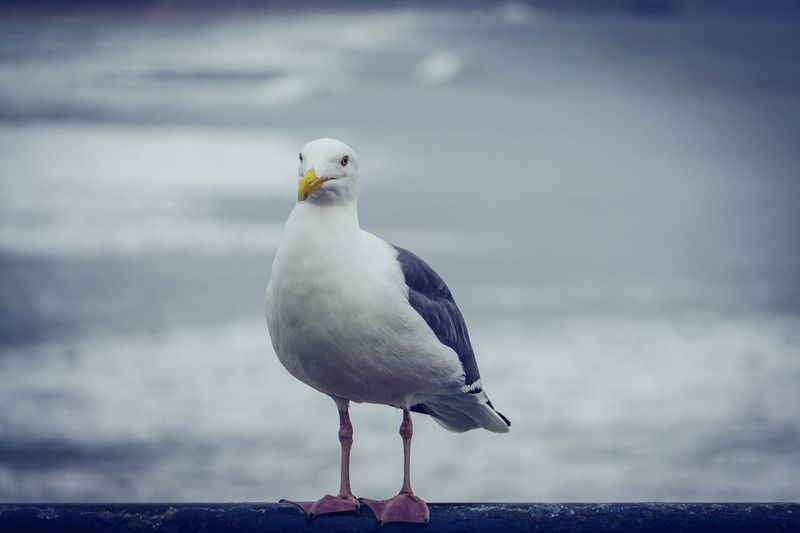 Bird Sea Water