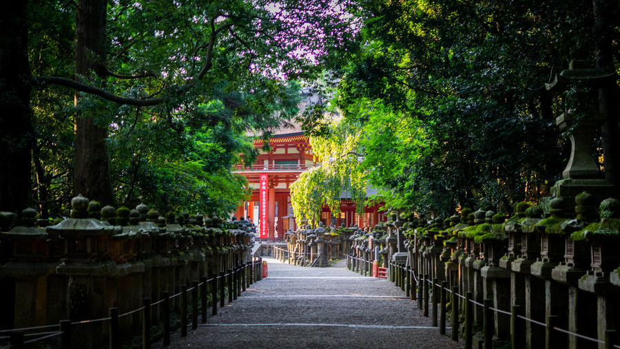 Temple - Nara - Japan EyeEmNewHere Japan The Traveler - 2018 EyeEm Awards Travel Photography Architecture Belief Building Exterior Built Structure Day Direction Footpath Green Color Growth Nature No People Outdoors Place Of Worship Plant Railing Religion Religion And Beliefs Shrine Temple The Way Forward Tree The Traveler - 2018 EyeEm Awards EyeEmNewHere