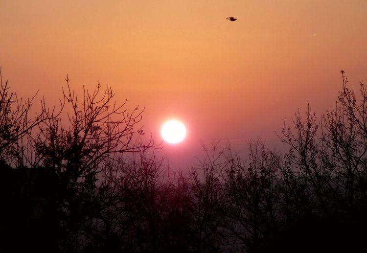 Sky Sun Tree