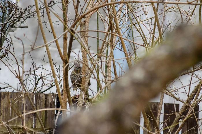 Sparrow sitting on fence in garden. Bird In Garden Sparrow On Fence Animal Themes Animal Wildlife Bird Bird On Fence No People One Animal Sparrow