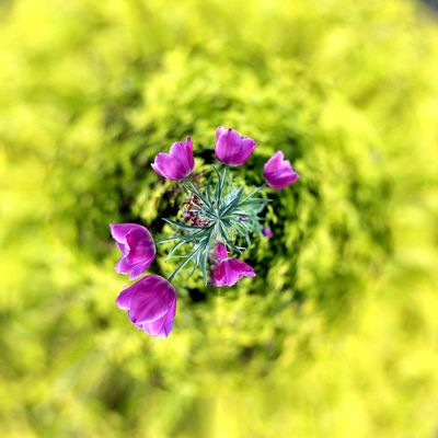 3XSPUnity EyeEm Best Shots Enjoying Life EyeEmNewHere Flower Flowering Plant Plant Freshness Fragility Beauty In Nature Vulnerability  Purple Inflorescence Growth Nature Flower Head Close-up No People Petal Focus On Foreground Pink Color Day Outdoors Botany