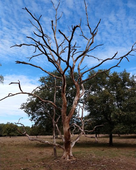 Tree Branch Bare Tree Sky Cloud - Sky