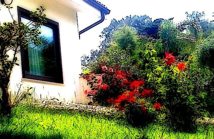 Flowers My Working Desk EyeEmBestEditsLovelovelove