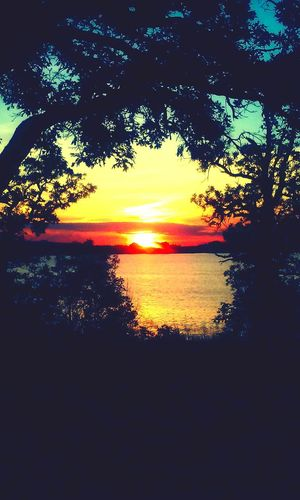 A Walk In The Woods EyeEm Nature Lover Lake Herman Lake View Sunset Hugging A Tree Walking Around Mytherapy