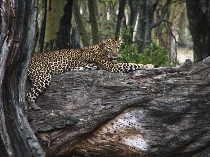 Cat lying on tree trunk in forest