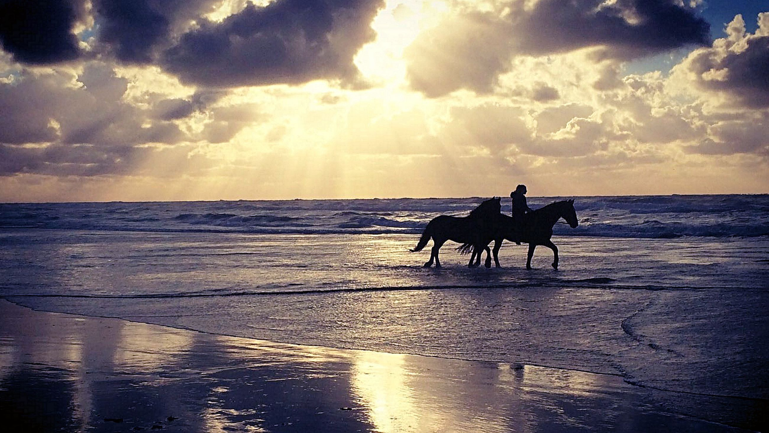 sea, horizon over water, water, sunset, sky, cloud - sky, beach, reflection, beauty in nature, nature, silhouette, scenics, tranquil scene, domestic animals, tranquility, sun, sand, men, outdoors, mammal, wave, real people, day, people