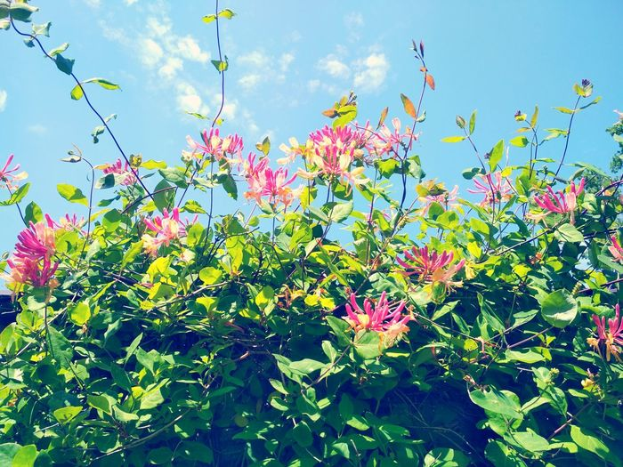 Flower Plant Nature Day Sky Outdoors Growth No People Green Color Leaf Beauty In Nature Freshness Pink Color Fragility Flower Head Close-up
