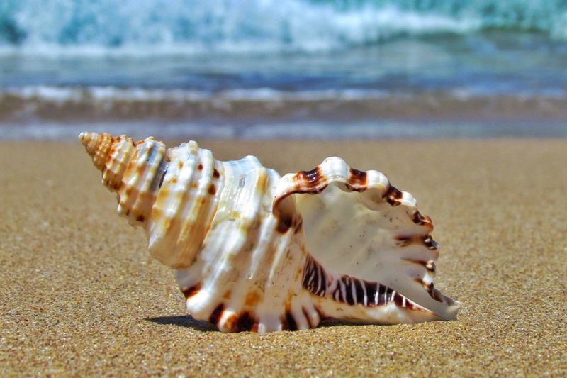 Tenha uma ótima sexta!!! Deus abençoe você!!! Have a great friday!!! God bless you!!! Tainha Beach - Santa Catarina , Brazil