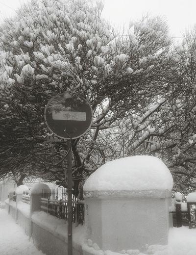 В середине зимы. Snow зима снег город деревья Tree Outdoors Nature No People City
