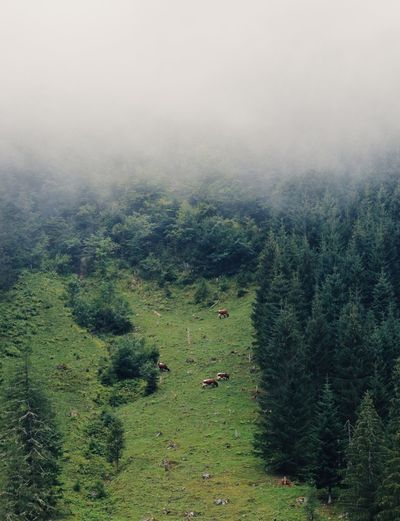 Weather Beauty In Nature Cows Fog Forest Gosausee Green Color Landscape Nature Nature_collection Nature_perfection Naturelovers Plant Scenics - Nature Tranquil Scene Tranquility Tree Weather Condition WoodLand