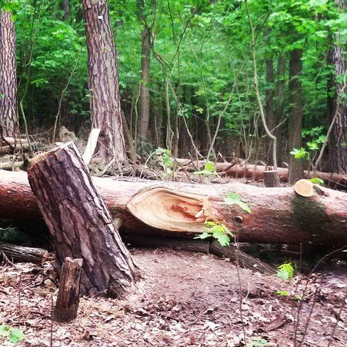 Aliceinwonderland Wood Adoro Troncofilosofiadivita Green Schlachtensee noicheandiamoallagosenzailsole