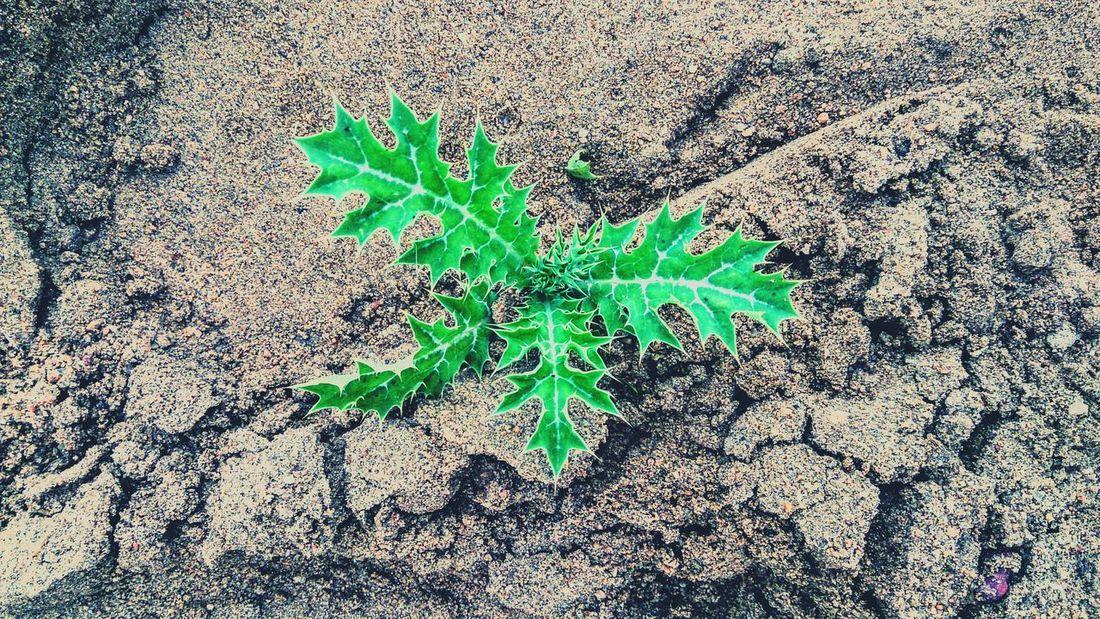 Sand Areia Plants Plant Taking Photos Green Green Green Green!  Things That Are Green Nature Everywhere Leaves