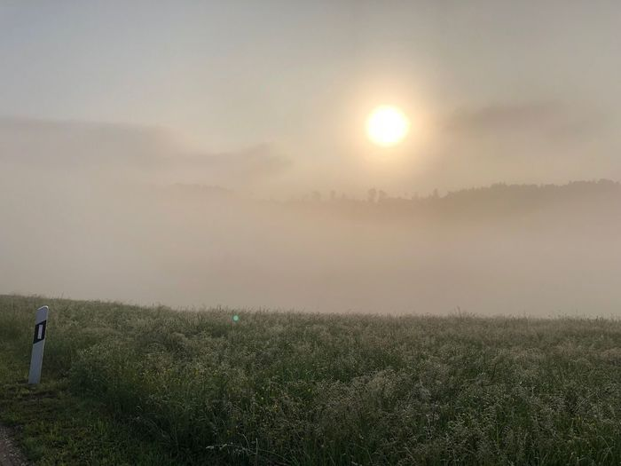 FogyNature Fogy Sunrise Sonnenaufgang Nebel Switzerland Land Field Environment Landscape Beauty In Nature Scenics - Nature Plant Rural Scene Nature Outdoors Tranquility Sun