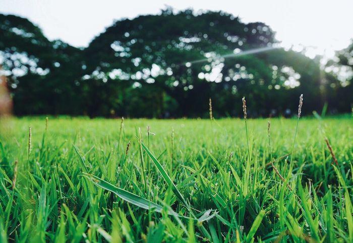 """เราต้องรักษาธรรมชาติให้คงอยู่ Green Color Nature Landscape Beauty In Nature Tree Outdoors Beautiful Lifestyles Bangkok Thailand. Nature Photographer Photooftheday Photography Photo By ... Memay """"S.R."""" Time Street Photography Photoshoot Picoftheday Pictureoftheday Panasonic  Lumixgf7 Naturelovers"""