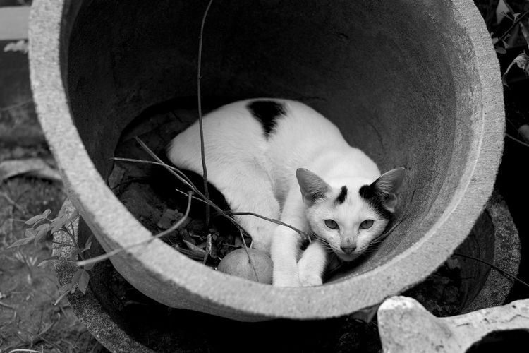 Sleep on a pot, high angle portrait of a cat resting on field