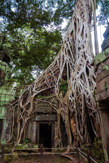Spirituality Religion Old Ruin Tree Architecture History Place Of Worship Root Ancient Travel Destinations Built Structure Ancient Civilization Travel Building Exterior Tourism Tradition Architectural Column Day Outdoors No People Cambodia Angkor Wat ASIA Temple Ancient