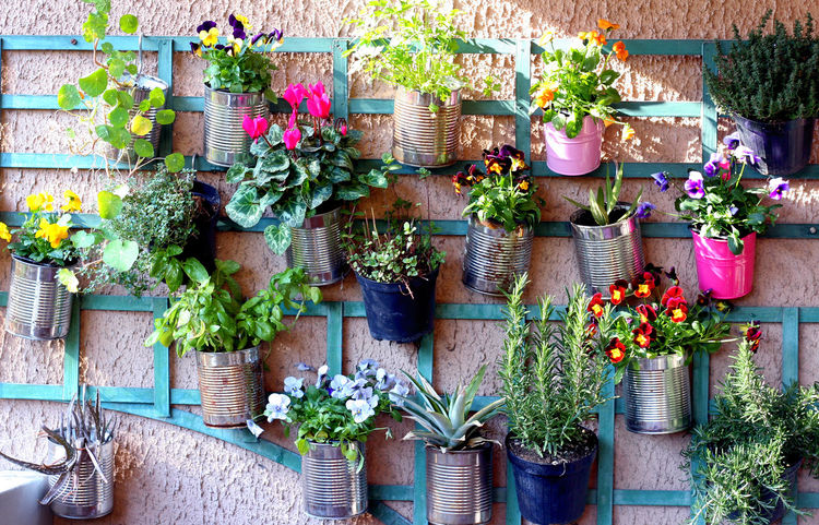 Beauty In Nature Close-up Flower Flowers Flowers,Plants & Garden Green Wall Growth Ivy Nature No People Outdoors Plant Potted Plant Succulent Plant Variation