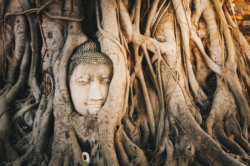 Buddha Head in bodhi root Wat Maha That. Ayutthaya historical park, travel in Thailand Ayutthaya Bodhi Tree Statue Thailand Travel Tree Wat Maha That Buddha Head Face Historical Park Roots Of Tree Temple