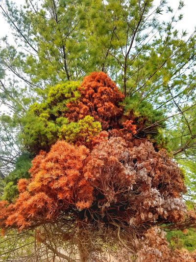 Tree Nature Growth Day Low Angle View Outdoors No People Beauty In Nature Sky Multi Colored