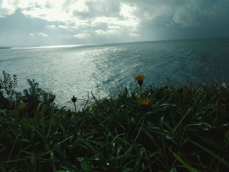 Sea Nature Water Tranquility Growth Beauty In Nature Horizon Over Water Plant No People Tranquil Scene Outdoors Day Grass Scenics Beach Sky Flower Close-up