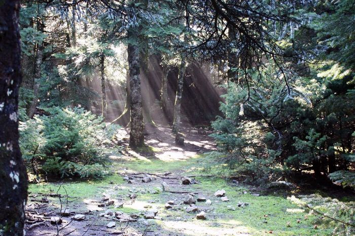 Happy Earth Day! Earth Day Forest Parnitha Nature