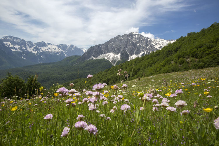 Scenic view of flowering plants on field against cloudy sky