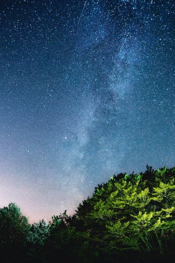 Milky Way Plant Tree Low Angle View No People Sky Nature Beauty In Nature Tranquility Architecture Backgrounds Built Structure Green Color Window Day Pattern Full Frame Outdoors Growth Silhouette