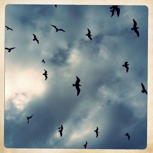 Birds flyin' high