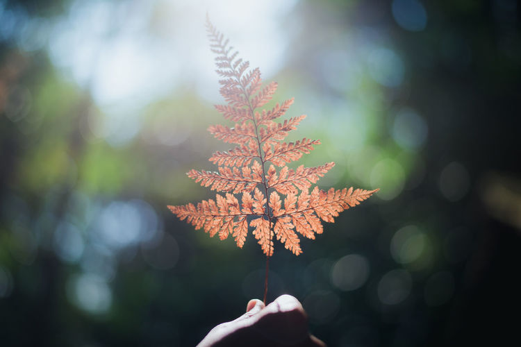 Human Hand Autumn Leaf Hand Plant Part Tree Change Plant Nature Human Body Part One Person Focus On Foreground Close-up Real People Day Body Part Human Finger Maple Leaf Outdoors Selective Focus Finger Leaves Autumn Collection