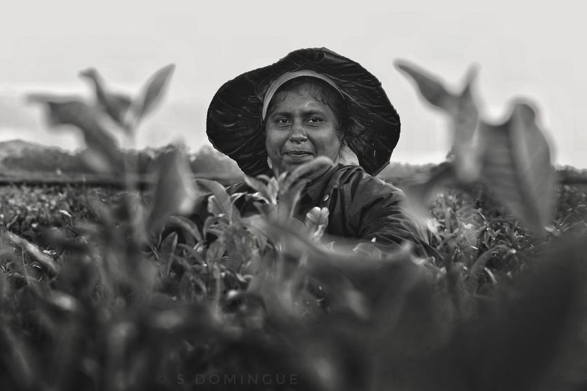 In the tea fields of Bois Cheri 🌿 Cheri Of Bois Cheri EyeEm Selects Photojournalism Black And White Collection Portrait Outdoor Photography Landscape Photojournalist Mauritiusisland Pipolcapture Nature Behindthescenes Tea Plantation Worker EyeEmNewHere