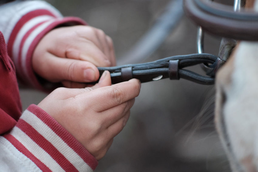 Care Close-up Connection Day Focus On Foreground Holding Horse Human Body Part Human Hand Outdoors People Real People