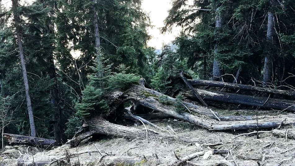 Tree Nature Beauty In Nature AlpsMountain 3XSPUnity Allgäu Alps