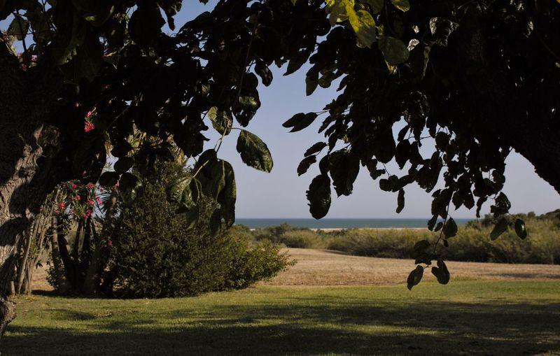Cacela Velha Portugal CacelaVelha Field Landscape Outdoors Pink And Green The Way Forward Tree