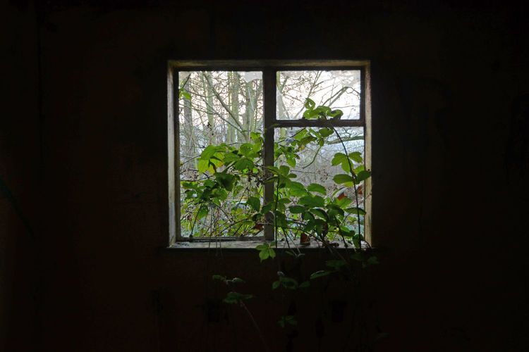 Abandoned Building Growth Looking Out Mother Nature Will Prevail Plant Window