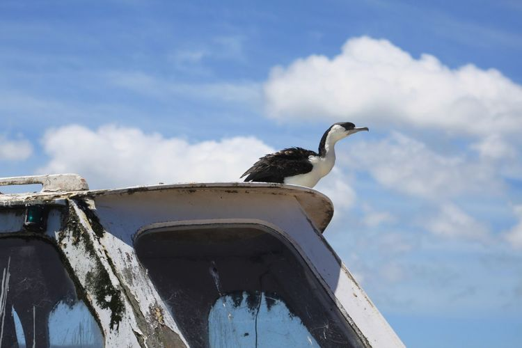 Seagull perching on boat against sky
