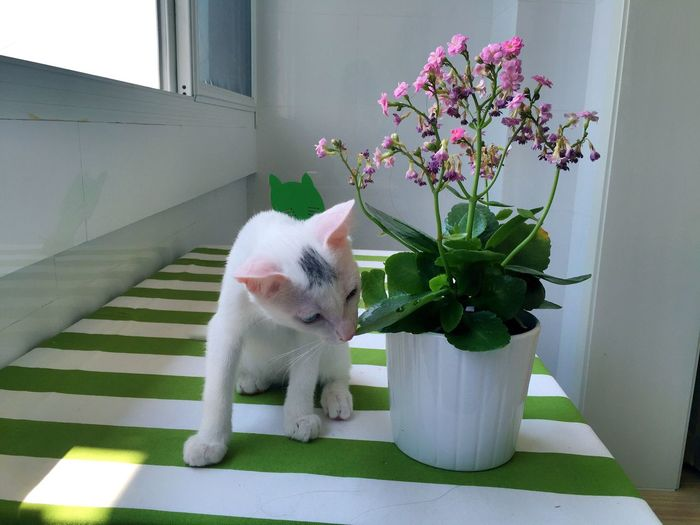 Cute Pet Cat Hello World Cute Cats Cute Pets Flowers