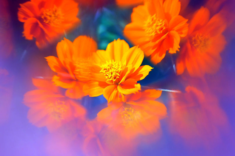 Beauty In Nature Blooming Botany Close-up Flower Flower Head Focus On Foreground Fragility Nature Orange Color Pollen Springtime Tranquility Vibrant Color