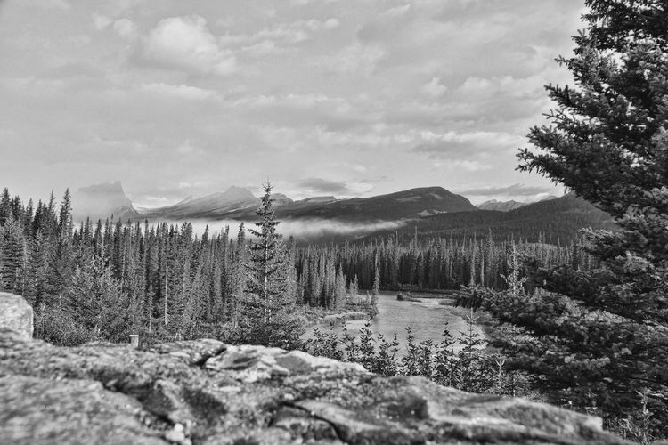 Alberta Alberta Canada Bare Tree Beauty In Nature Black And White Landscape Blackandwhite Cloud - Sky Cold Temperature Day Growth Landscape Mountain Nature No People Outdoors Scenics Sky Snow Tranquility Tree