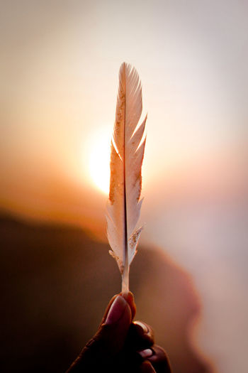 Close-up of hand holding feather against sky during sunset