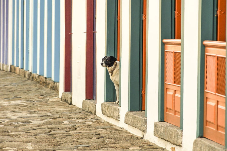 Dog standing at doorway of beach hut