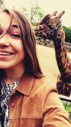 ##Girafe Love Boyfriends
