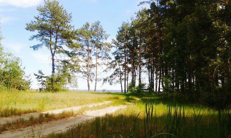 Forest Trees Natural Beauty Sukholuch'ye Ukraine