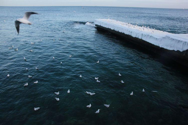 Sea Blacksea Seagulls