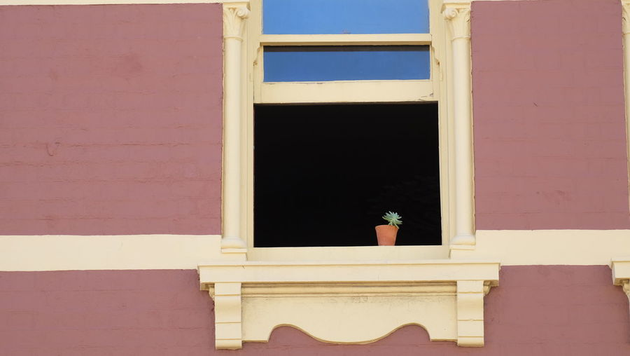 Small Potted Plant On Window