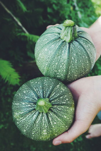 Cropped hand holding squashes at farm